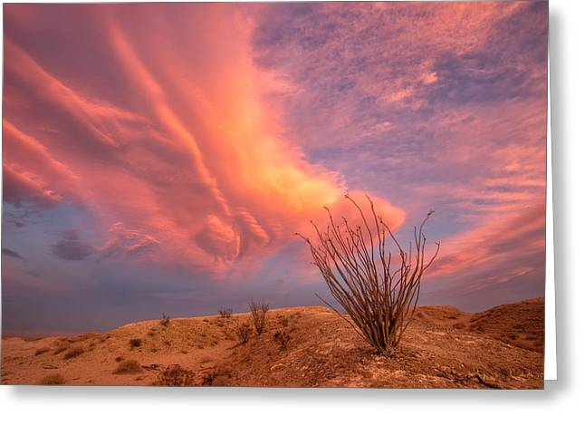 Locations Greeting Cards - Life in the Fishbowl Greeting Card by Peter Tellone