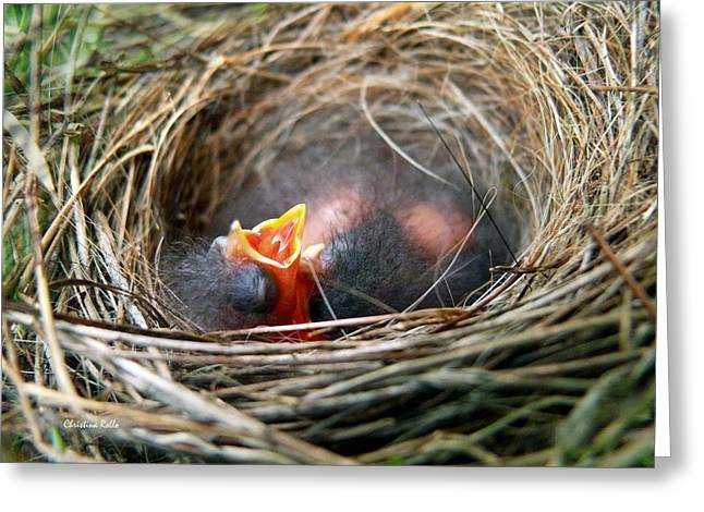 Life in the Nest Greeting Card by Christina Rollo