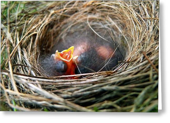 Chipping Sparrow Greeting Cards - Life in the Nest Greeting Card by Christina Rollo