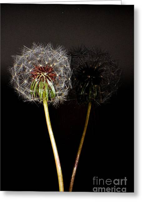 Good Karma Greeting Cards - Life is just dandy Dandelion Reflections Greeting Card by adSpice Studios
