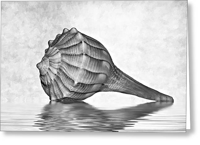 Shell Pattern Greeting Cards - Life Lines 2 bw Greeting Card by Steve Harrington