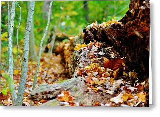 Next To Tree Greeting Cards - Life Next to Death Greeting Card by Michelle McPhillips