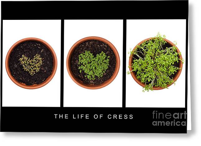 Germinate Greeting Cards - Life of Cress Greeting Card by Anne Gilbert