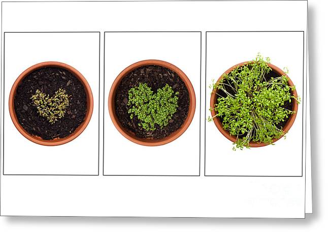 Germinate Greeting Cards - Life of Cress on White Greeting Card by Anne Gilbert