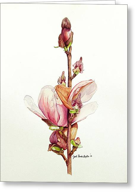 Pancho Greeting Cards - Life Of Magnolia Botanical Painting Greeting Card by Janet Pancho Gupta