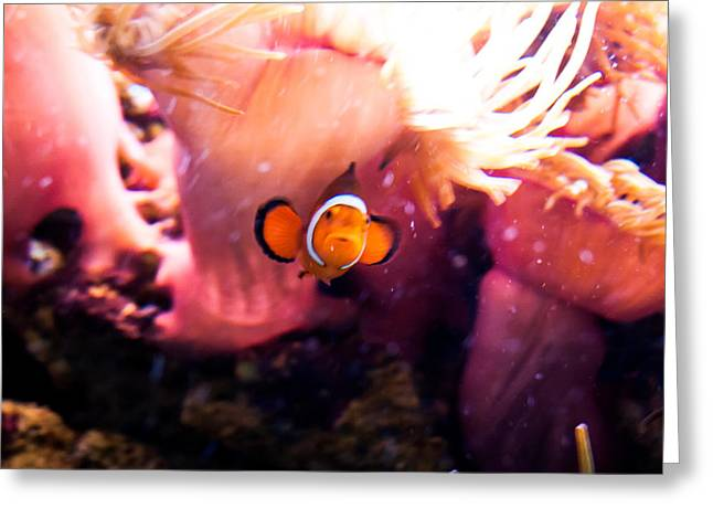 Waterlife Greeting Cards - Life of Nemo Greeting Card by Nathalie Hope