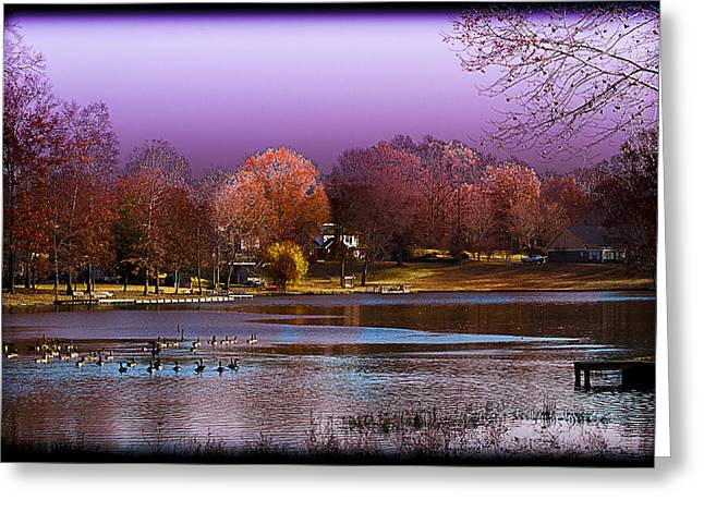 South For The Winter Greeting Cards - Life on the Lake Greeting Card by Barry Jones
