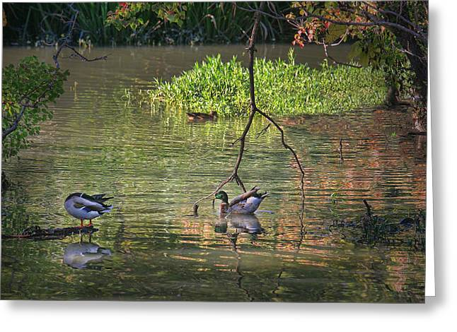 Organe Greeting Cards - Life on the Lake Greeting Card by Joan Bertucci