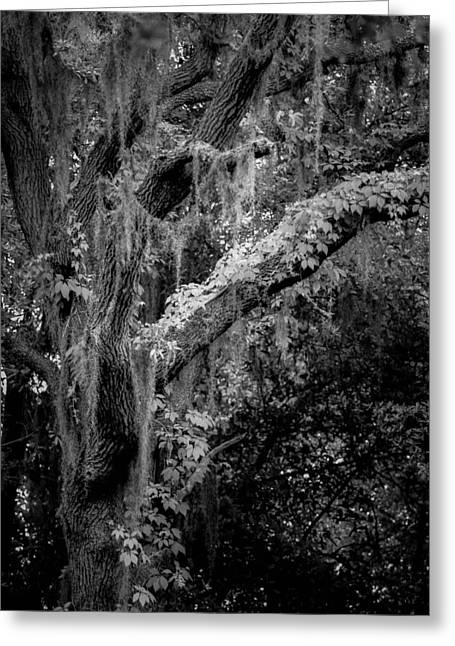 Florida Tree Greeting Cards - Life remains Greeting Card by Toni Hopper