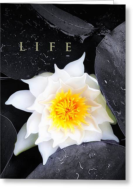 Water Lilly Digital Greeting Cards - Life Greeting Card by Ron Regalado