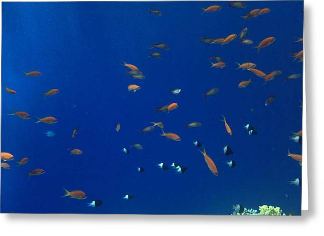 Real Experiences Greeting Cards - Life under water Greeting Card by Isabelle Hansen