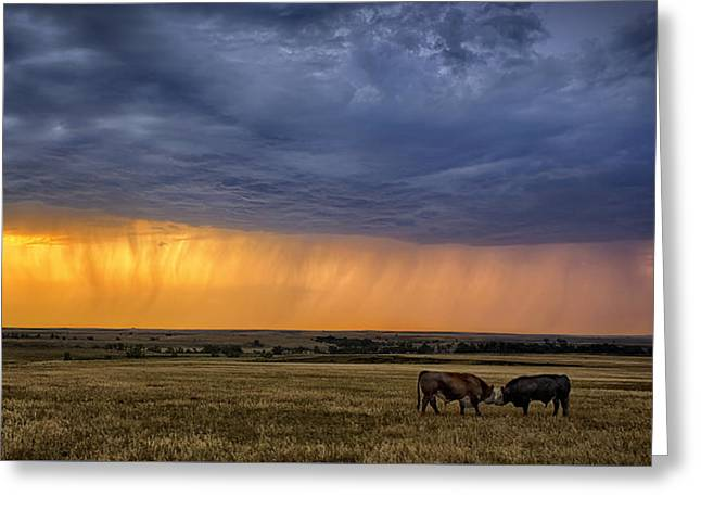 Grassland Greeting Cards - Lifeblood Greeting Card by Thomas Zimmerman