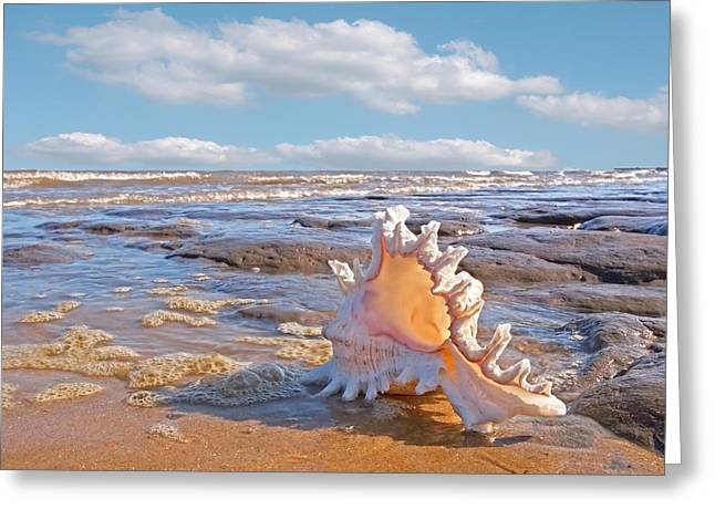 Day At The Beach Greeting Cards - Lifes a Beach - Murex Ramosus Seashell Greeting Card by Gill Billington