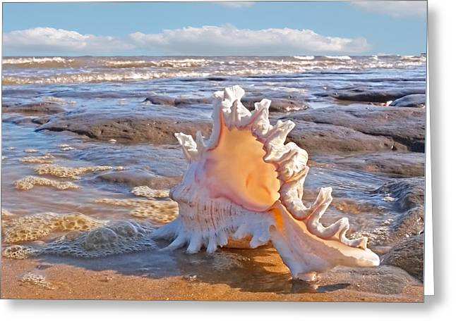 Day At The Beach Greeting Cards - Lifes a Beach - Murex Ramosus Seashell - Square Greeting Card by Gill Billington