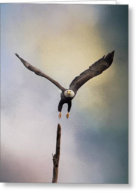 Mound Greeting Cards - Lift Off - Bald Eagle Greeting Card by Jai Johnson