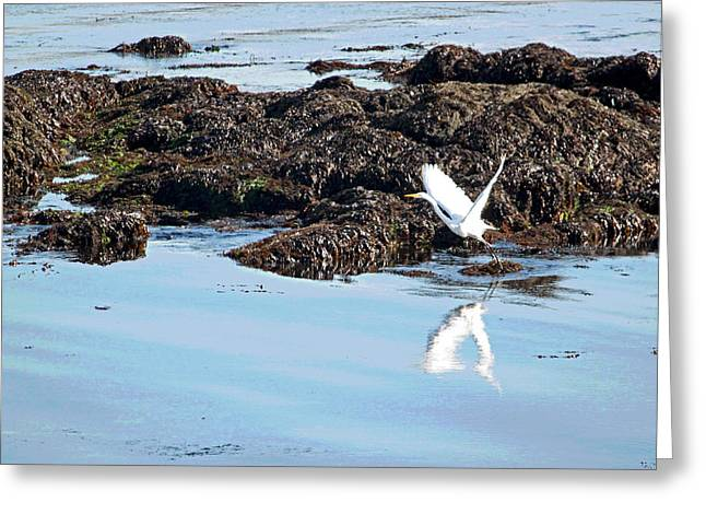 Big Sur California Greeting Cards - Lift Off II Greeting Card by Suzanne Gaff