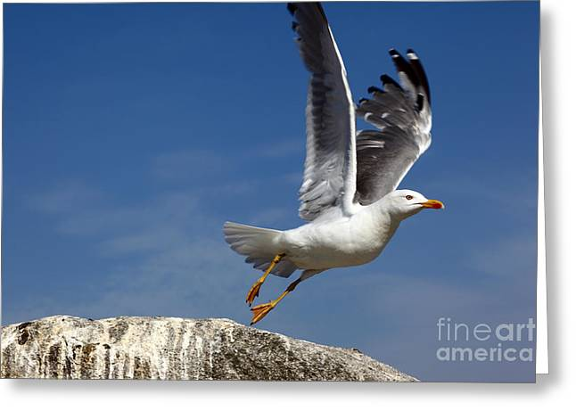 Lift Off Greeting Card by James Brunker