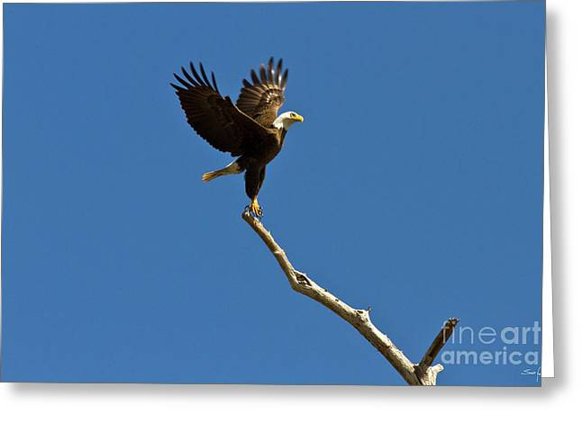 Swamp People Greeting Cards - Lift Off Greeting Card by Scott Pellegrin