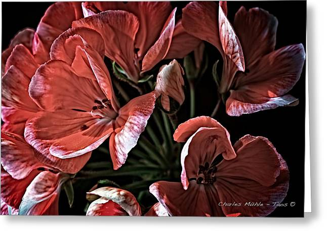 Red Geraniums Mixed Media Greeting Cards - Light and shadow Greeting Card by Charles Muhle