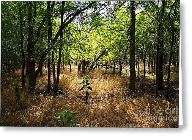 Bottomlands Greeting Cards - Light and Shadows Greeting Card by Gary Richards
