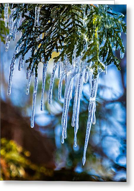 Snow Tree Prints Greeting Cards - Light Chimes 4 Greeting Card by Steve Harrington