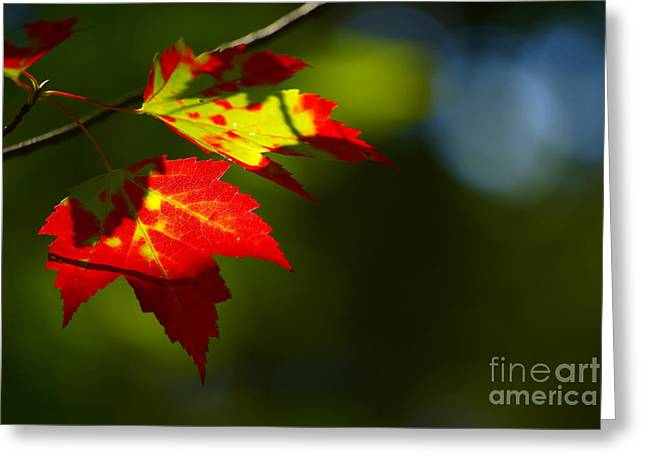 """""""aimelle Photography"""" Greeting Cards - Light gives us all a Chance Greeting Card by Aimelle"""