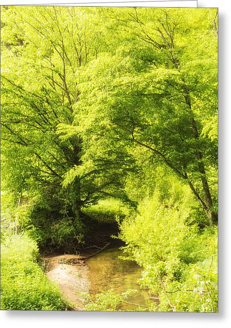 Deutschland Greeting Cards - Light green colors of early spring Greeting Card by Matthias Hauser