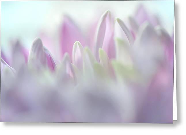 Light Impression 2. Pink Chrysanthemum  Greeting Card by Jenny Rainbow