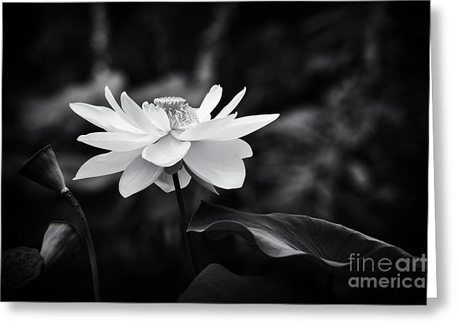 Aquatic Plants Greeting Cards - Light in Dark Spaces Greeting Card by Tim Gainey