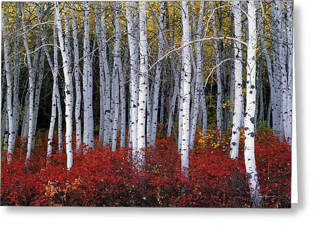 Yellow Autumn Greeting Cards - Light in Forest Greeting Card by Leland D Howard