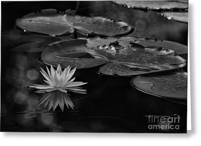 Lilly Pads Greeting Cards - Light In The Darkness Greeting Card by Deborah Benoit