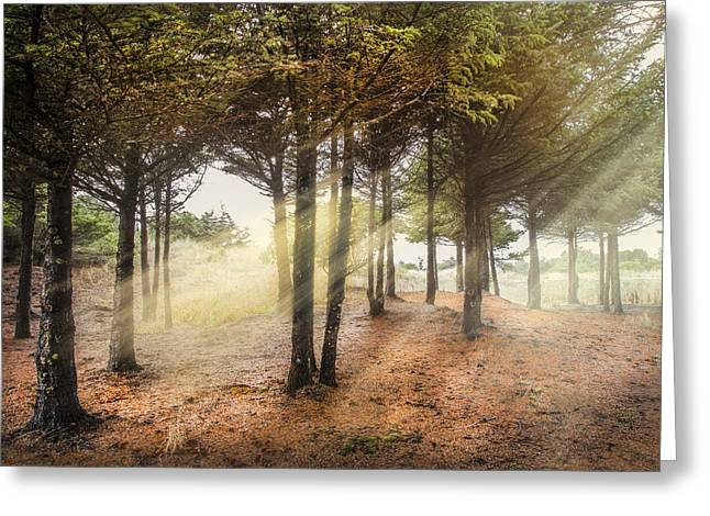 Foggy Ocean Greeting Cards - Light in the Dunes Greeting Card by Debra and Dave Vanderlaan