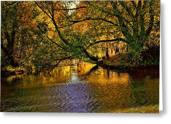 Abstract Waves Greeting Cards - Light in the trees Greeting Card by Leif Sohlman
