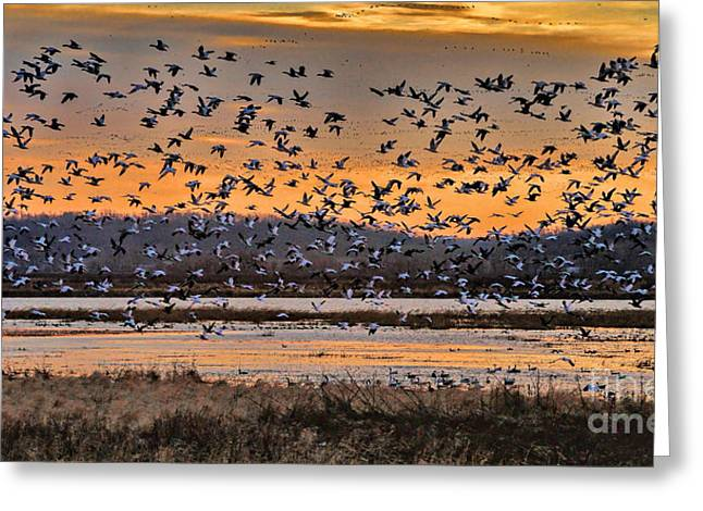 Wildlife Refuge. Greeting Cards - Light of Dawn Greeting Card by Elizabeth Winter