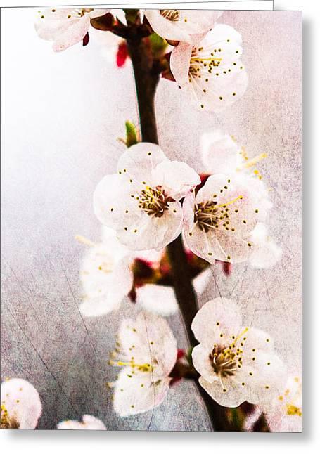 Fruit Tree Art Greeting Cards - Light Of Spring 1 Greeting Card by Alexander Senin