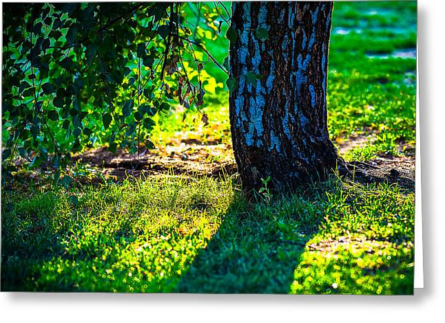 Planet Earth Greeting Cards - Light Of Summer Evening Greeting Card by Alexander Senin