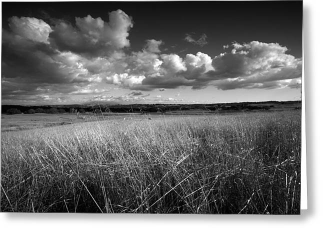 Locations Greeting Cards - Light on the Grasslands Greeting Card by Peter Tellone