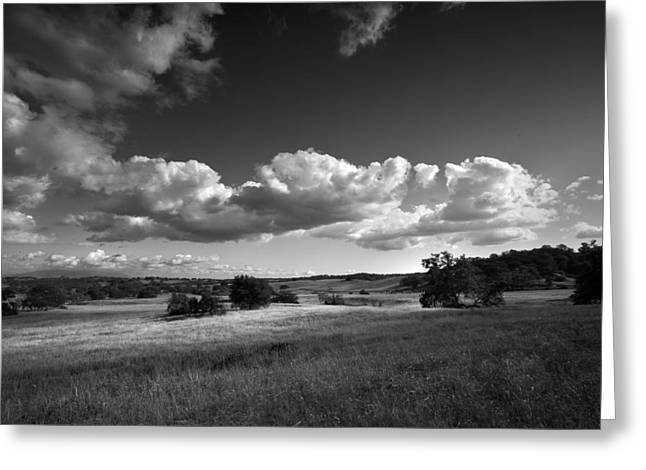 Locations Greeting Cards - Light on the Meadow Greeting Card by Peter Tellone