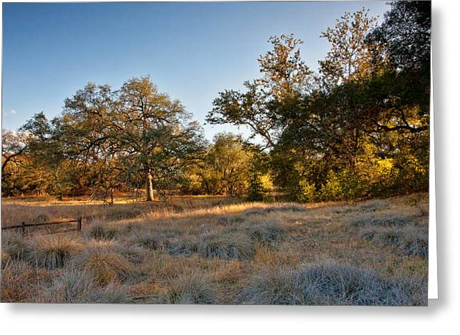 Big Sky Greeting Cards - Light on the Pasture Greeting Card by Peter Tellone