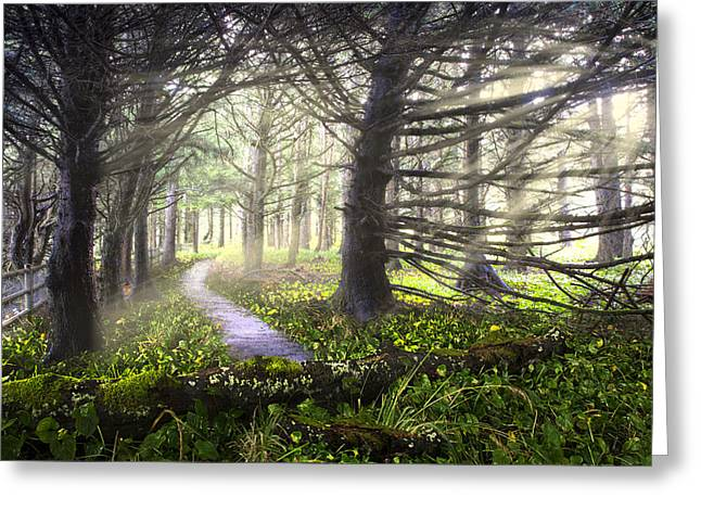 Foggy Beach Greeting Cards - Light on the Trail Greeting Card by Debra and Dave Vanderlaan