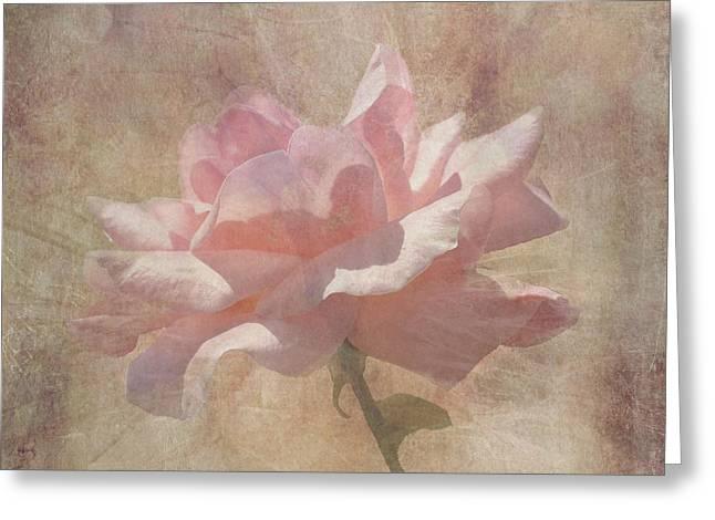 Rosalie Scanlon Greeting Cards - Light Pink Grunge Rose Greeting Card by Rosalie Scanlon