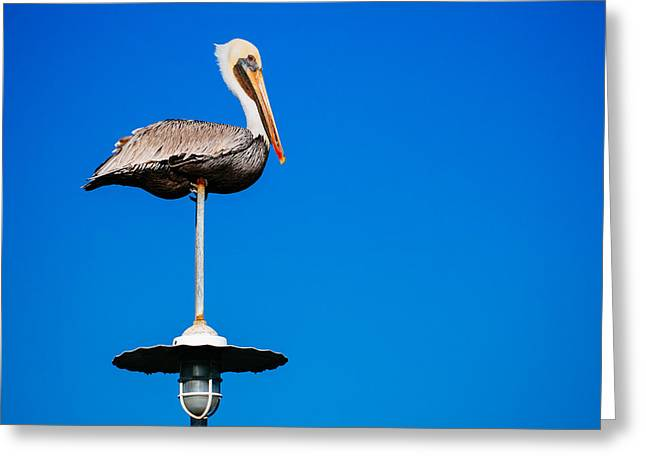 Water Bodies Of Texas Greeting Cards - Light Pole Sitta Greeting Card by Ronnie Cole