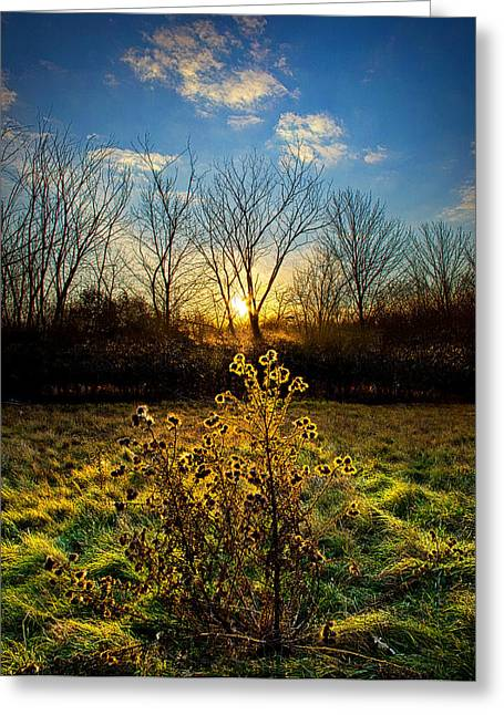 Geographic Greeting Cards - Light That is Felt Greeting Card by Phil Koch