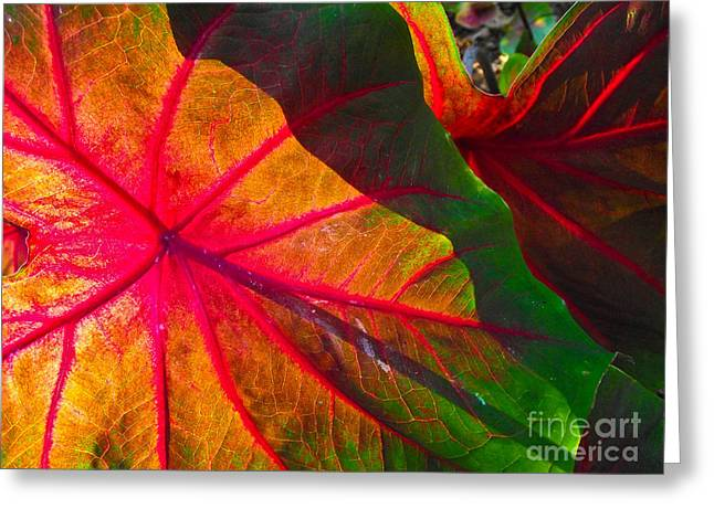 Red Leaves Pastels Greeting Cards - Light through Leaf Greeting Card by Caroline Peacock