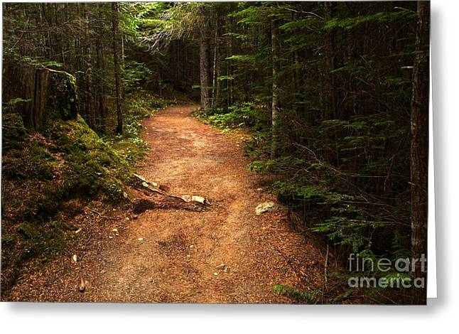 Lush Green Greeting Cards - Light Through The Forest Canopy Greeting Card by Adam Jewell