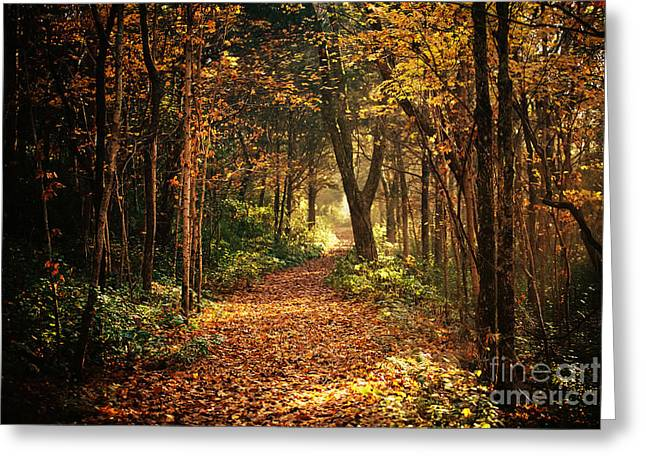 Warm Tones Greeting Cards - Light Through the Trees Greeting Card by Katya Horner