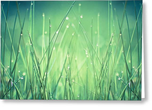 Dirk Wuestenhagen Greeting Cards - Light - Water and Grass Greeting Card by Dirk Wuestenhagen