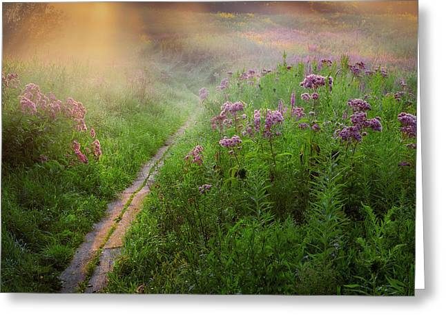 Purple Flower Greeting Cards - Lighted Path Greeting Card by Bill  Wakeley