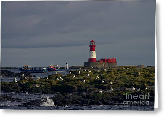 Farne Islands Greeting Cards - Lighthouse on The Farne Isands Northumberland Greeting Card by Martyn Arnold