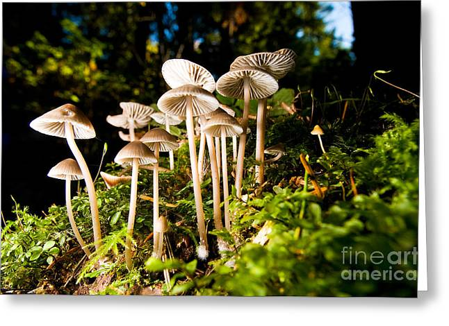 West Vancouver Greeting Cards - Lighthouse Park Mushrooms 4 Greeting Card by Terry Elniski